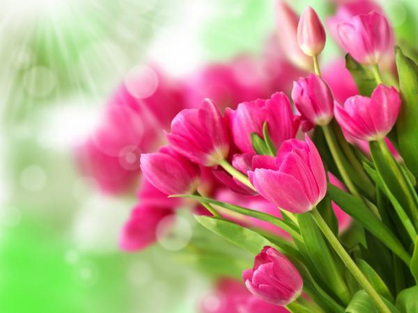 Цветы полевые видеть во сне