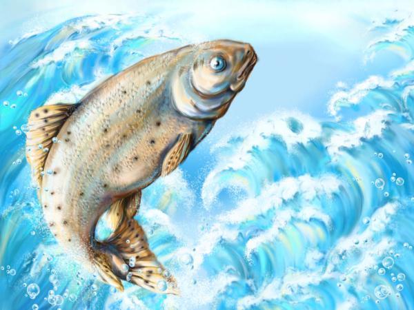 К чему снятся рыбы в воде женщине