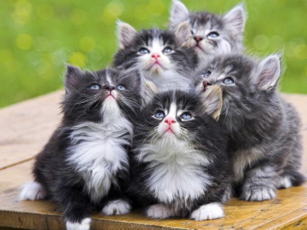 К чему снятся серые котята маленькие много фото